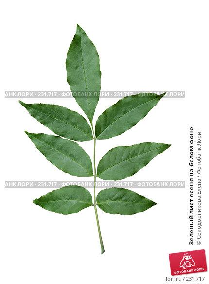 Купить «Зеленый лист ясеня на белом фоне», фото № 231717, снято 27 мая 2007 г. (c) Солодовникова Елена / Фотобанк Лори