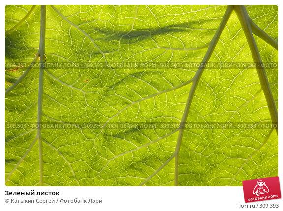 Зеленый листок, фото № 309393, снято 1 июня 2008 г. (c) Катыкин Сергей / Фотобанк Лори