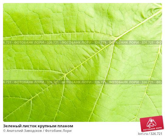 Купить «Зеленый листок крупным планом», фото № 326721, снято 8 июля 2007 г. (c) Анатолий Заводсков / Фотобанк Лори