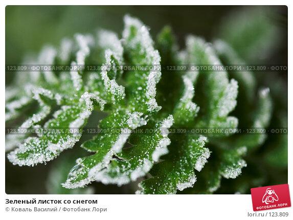Зеленый листок со снегом, фото № 123809, снято 25 мая 2007 г. (c) Коваль Василий / Фотобанк Лори