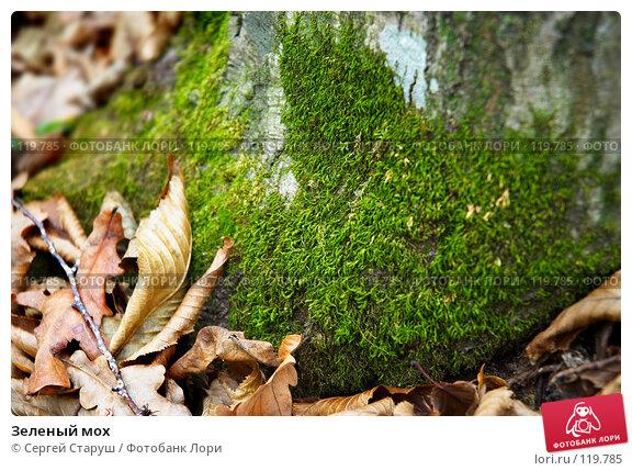 Купить «Зеленый мох», фото № 119785, снято 26 ноября 2006 г. (c) Сергей Старуш / Фотобанк Лори