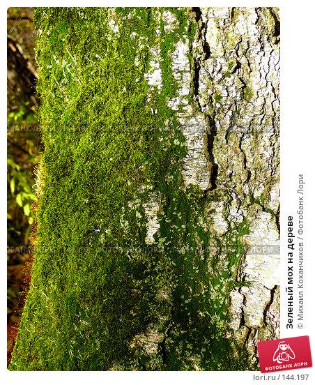 Зеленый мох на дереве, фото № 144197, снято 11 октября 2007 г. (c) Михаил Коханчиков / Фотобанк Лори
