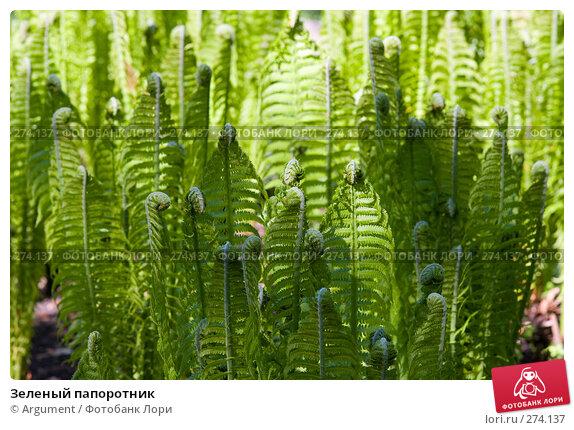 Зеленый папоротник, фото № 274137, снято 24 апреля 2008 г. (c) Argument / Фотобанк Лори