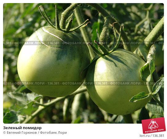 Зеленый помидор, фото № 136381, снято 23 июля 2005 г. (c) Евгений Горюнов / Фотобанк Лори