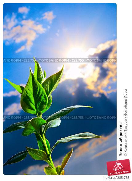 Купить «Зеленый росток», фото № 285753, снято 1 мая 2008 г. (c) Константин Тавров / Фотобанк Лори