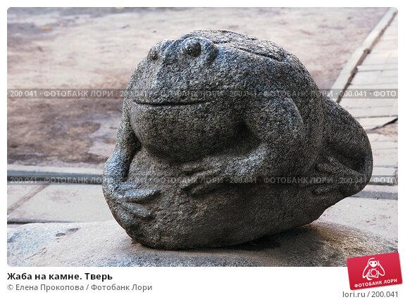 Жаба на камне. Тверь, фото № 200041, снято 3 августа 2007 г. (c) Елена Прокопова / Фотобанк Лори