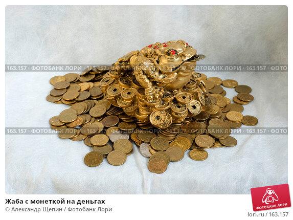 Жаба с монеткой на деньгах, эксклюзивное фото № 163157, снято 29 декабря 2007 г. (c) Александр Щепин / Фотобанк Лори