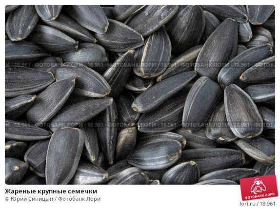 Жареные крупные семечки, фото № 18961, снято 22 февраля 2007 г. (c) Юрий Синицын / Фотобанк Лори