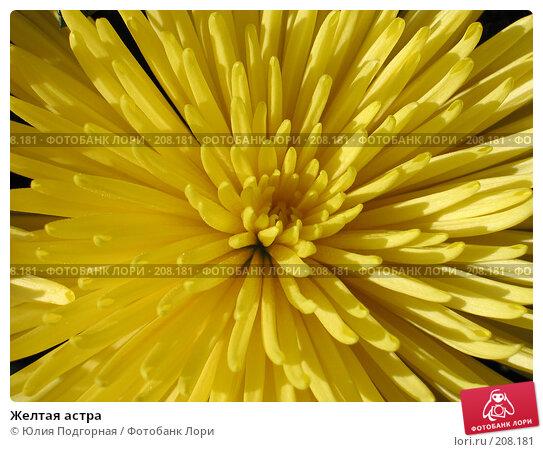 Купить «Желтая астра», фото № 208181, снято 23 февраля 2008 г. (c) Юлия Селезнева / Фотобанк Лори