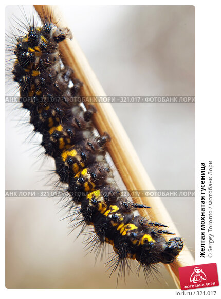 Купить «Желтая мохнатая гусеница», фото № 321017, снято 13 апреля 2008 г. (c) Sergey Toronto / Фотобанк Лори