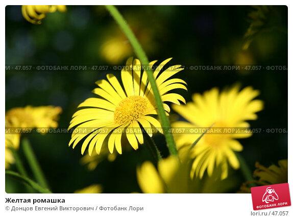 Желтая ромашка, фото № 47057, снято 26 мая 2007 г. (c) Донцов Евгений Викторович / Фотобанк Лори