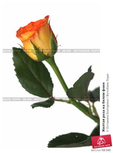 Купить «Желтая роза на белом фоне», фото № 68945, снято 4 августа 2007 г. (c) Останина Екатерина / Фотобанк Лори