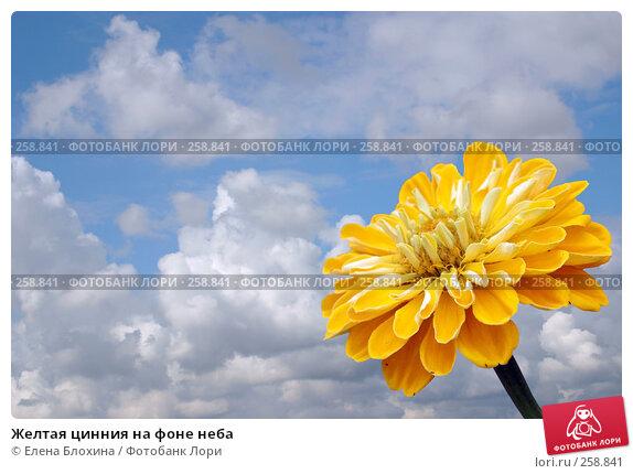 Купить «Желтая цинния на фоне неба», фото № 258841, снято 24 апреля 2007 г. (c) Елена Блохина / Фотобанк Лори