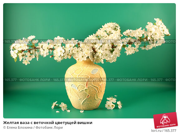 Желтая ваза с веточкой цветущей вишни, фото № 165377, снято 13 мая 2007 г. (c) Елена Блохина / Фотобанк Лори