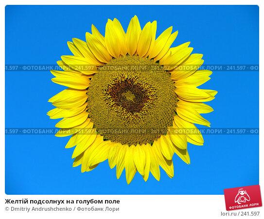 Желтій подсолнух на голубом поле, фото № 241597, снято 30 июля 2007 г. (c) Dmitriy Andrushchenko / Фотобанк Лори