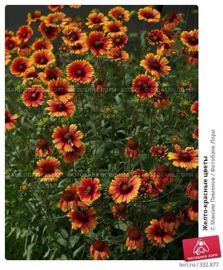 Желто-красные цветы, фото № 332877, снято 3 сентября 2006 г. (c) Максим Пименов / Фотобанк Лори