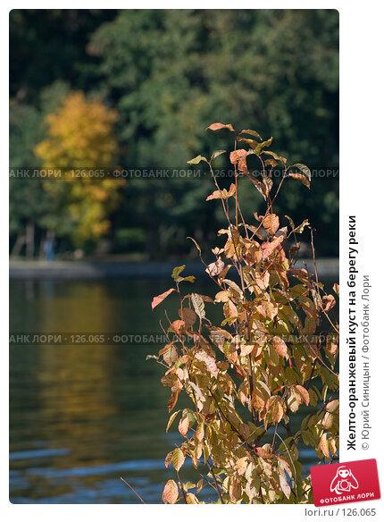 Желто-оранжевый куст на берегу реки, фото № 126065, снято 22 сентября 2007 г. (c) Юрий Синицын / Фотобанк Лори