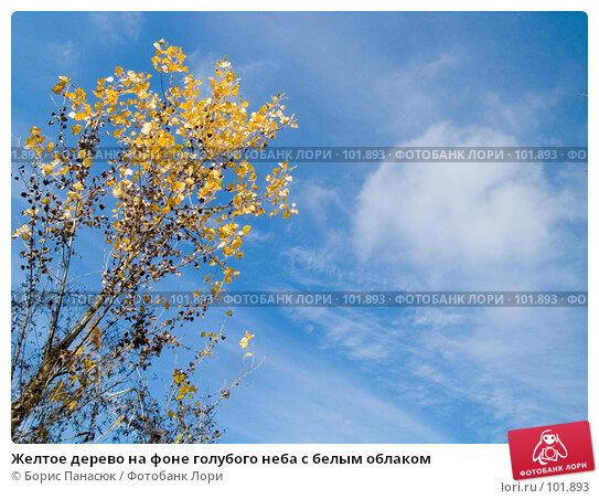 Желтое дерево на фоне голубого неба с белым облаком, фото № 101893, снято 29 сентября 2006 г. (c) Борис Панасюк / Фотобанк Лори