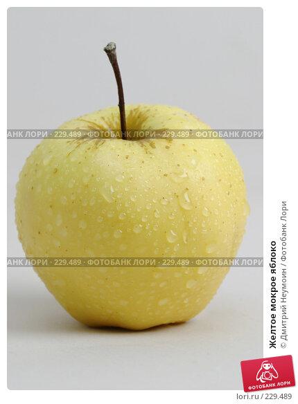 Желтое мокрое яблоко, эксклюзивное фото № 229489, снято 17 января 2017 г. (c) Дмитрий Неумоин / Фотобанк Лори
