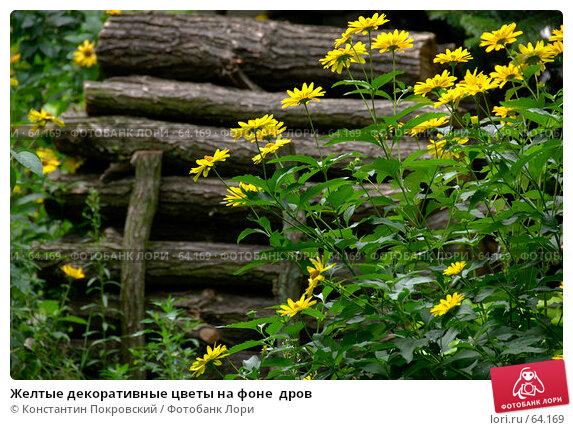 Купить «Желтые декоративные цветы на фоне  дров», фото № 64169, снято 21 июля 2007 г. (c) Константин Покровский / Фотобанк Лори