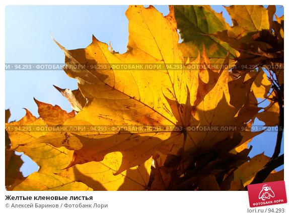 Желтые кленовые листья, фото № 94293, снято 27 сентября 2007 г. (c) Алексей Баринов / Фотобанк Лори