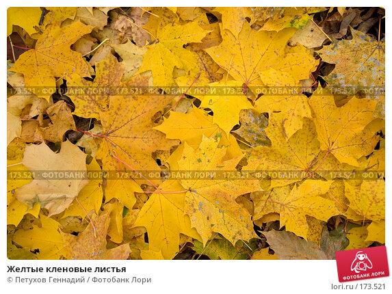 Желтые кленовые листья, фото № 173521, снято 27 октября 2007 г. (c) Петухов Геннадий / Фотобанк Лори