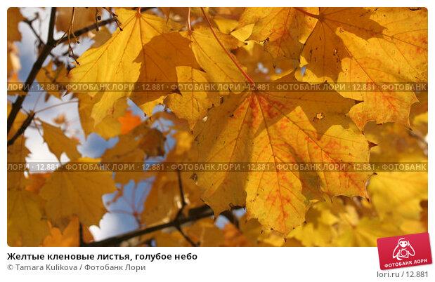 Желтые кленовые листья, голубое небо, фото № 12881, снято 13 ноября 2006 г. (c) Tamara Kulikova / Фотобанк Лори