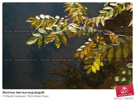 Желтые листья над водой, фото № 126073, снято 22 сентября 2007 г. (c) Юрий Синицын / Фотобанк Лори