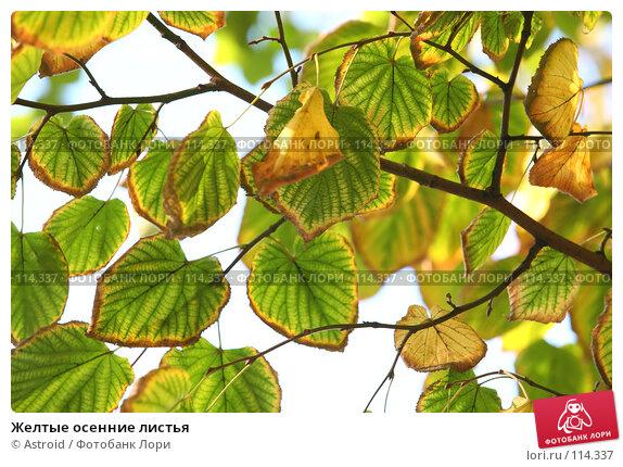Желтые осенние листья, фото № 114337, снято 30 сентября 2007 г. (c) Astroid / Фотобанк Лори