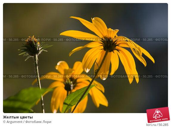 Желтые цветы, фото № 50285, снято 1 октября 2005 г. (c) Argument / Фотобанк Лори