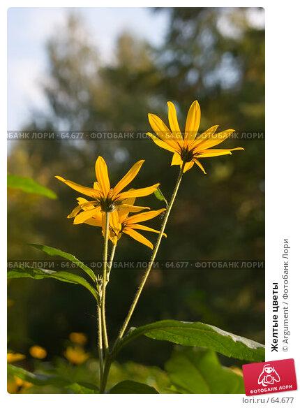 Желтые цветы, фото № 64677, снято 1 октября 2005 г. (c) Argument / Фотобанк Лори