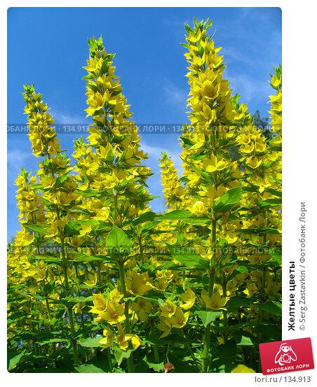 Желтые цветы, фото № 134913, снято 28 июня 2005 г. (c) Serg Zastavkin / Фотобанк Лори