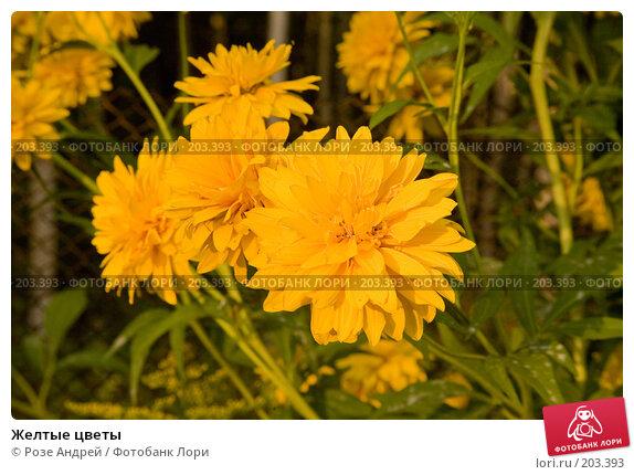 Желтые цветы, фото № 203393, снято 16 августа 2007 г. (c) Розе Андрей / Фотобанк Лори
