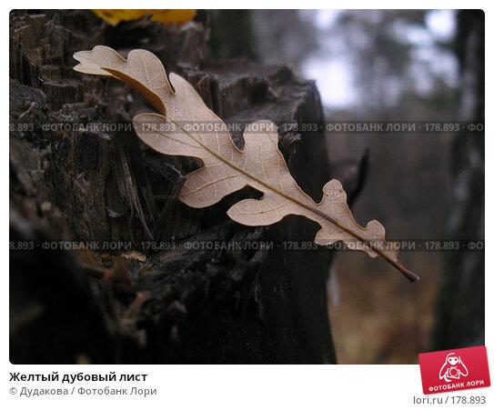 Желтый дубовый лист, фото № 178893, снято 27 октября 2007 г. (c) Дудакова / Фотобанк Лори