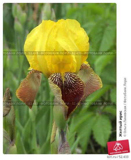 Желтый ирис, эксклюзивное фото № 52433, снято 12 июня 2007 г. (c) Ольга Линевская / Фотобанк Лори
