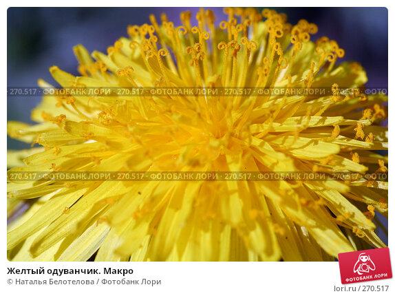 Желтый одуванчик. Макро, фото № 270517, снято 3 мая 2008 г. (c) Наталья Белотелова / Фотобанк Лори