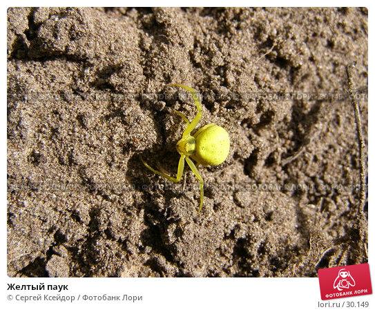 Желтый паук, фото № 30149, снято 12 июня 2006 г. (c) Сергей Ксейдор / Фотобанк Лори