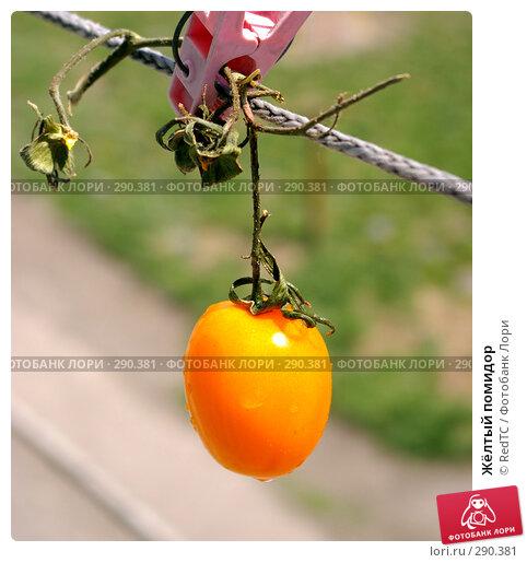 Жёлтый помидор, фото № 290381, снято 19 мая 2008 г. (c) RedTC / Фотобанк Лори