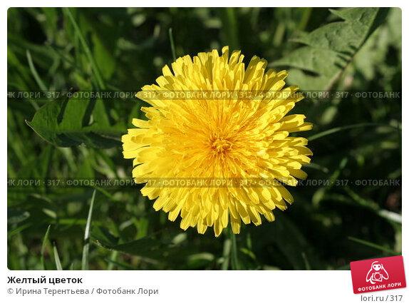 Купить «Желтый цветок», эксклюзивное фото № 317, снято 15 мая 2005 г. (c) Ирина Терентьева / Фотобанк Лори