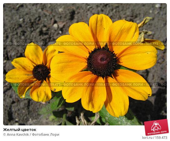 Купить «Желтый цветок», фото № 159473, снято 7 августа 2005 г. (c) Anna Kavchik / Фотобанк Лори