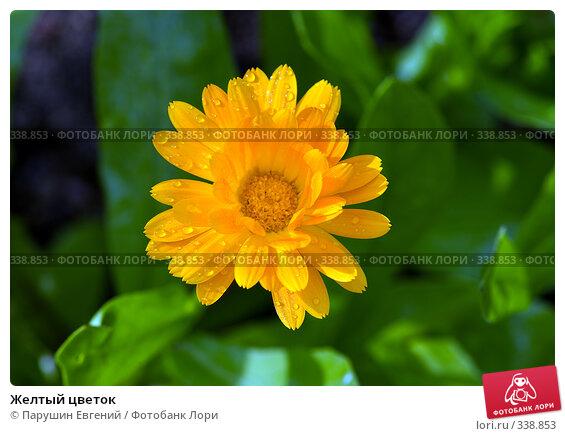 Купить «Желтый цветок», фото № 338853, снято 13 декабря 2017 г. (c) Парушин Евгений / Фотобанк Лори