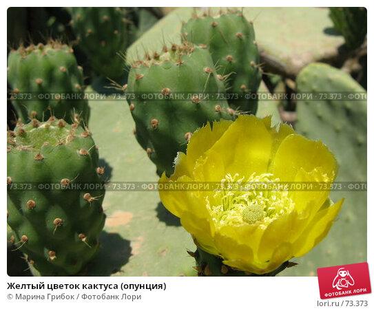 Купить «Желтый цветок кактуса (опунция)», фото № 73373, снято 12 июня 2007 г. (c) Марина Грибок / Фотобанк Лори