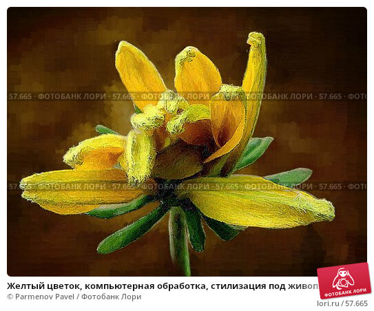 Купить «Желтый цветок, компьютерная обработка, стилизация под живопись», фото № 57665, снято 30 сентября 2006 г. (c) Parmenov Pavel / Фотобанк Лори
