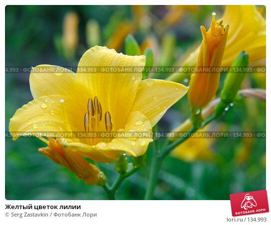 Желтый цветок лилии, фото № 134993, снято 14 июля 2005 г. (c) Serg Zastavkin / Фотобанк Лори