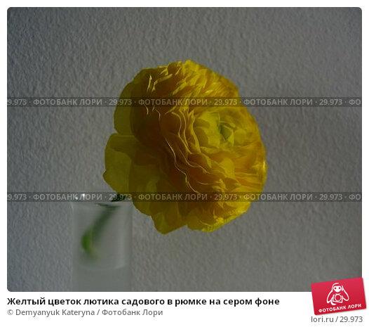 Желтый цветок лютика садового в рюмке на сером фоне, фото № 29973, снято 27 марта 2006 г. (c) Demyanyuk Kateryna / Фотобанк Лори