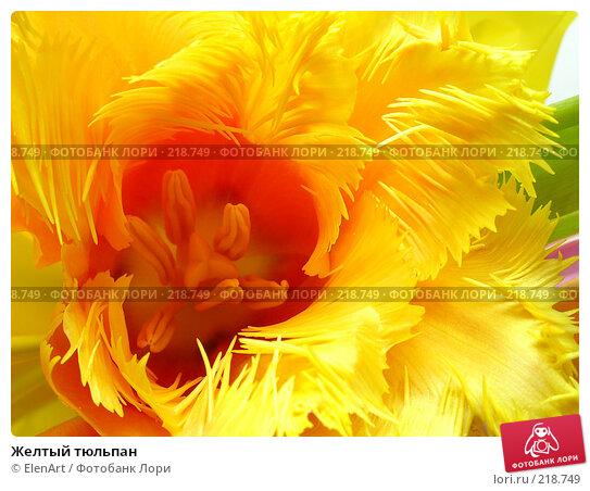 Купить «Желтый тюльпан», фото № 218749, снято 20 апреля 2018 г. (c) ElenArt / Фотобанк Лори