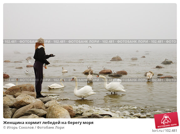 Женщина кормит лебедей на берегу моря, фото № 102481, снято 29 июля 2017 г. (c) Игорь Соколов / Фотобанк Лори