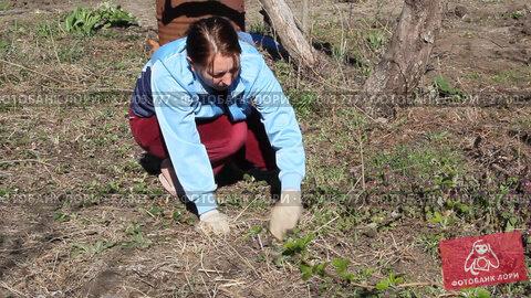 Купить «Женщина работает на даче. Женщина рвет сорную траву», видеоролик № 27003777, снято 4 апреля 2017 г. (c) Олег Хархан / Фотобанк Лори