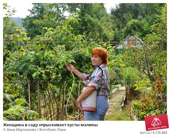 Купить «Женщина в саду опрыскивает кусты малины», фото № 4176885, снято 3 сентября 2011 г. (c) Анна Мартынова / Фотобанк Лори