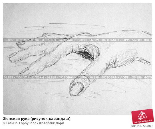 Женская рука (рисунок,карандаш), иллюстрация № 56889 (c) Галина  Горбунова / Фотобанк Лори